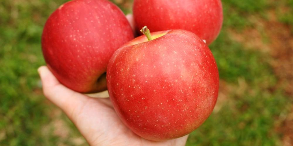 りんご狩り・なし狩り